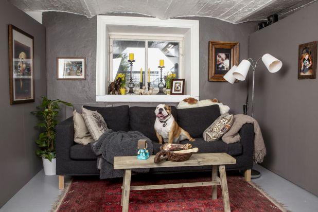 A-Bulldog-Love-Story__880