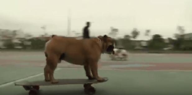 skate_bulldog
