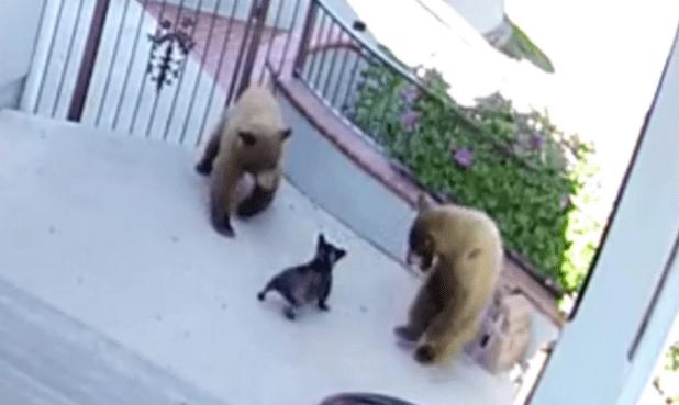 bears_scared.