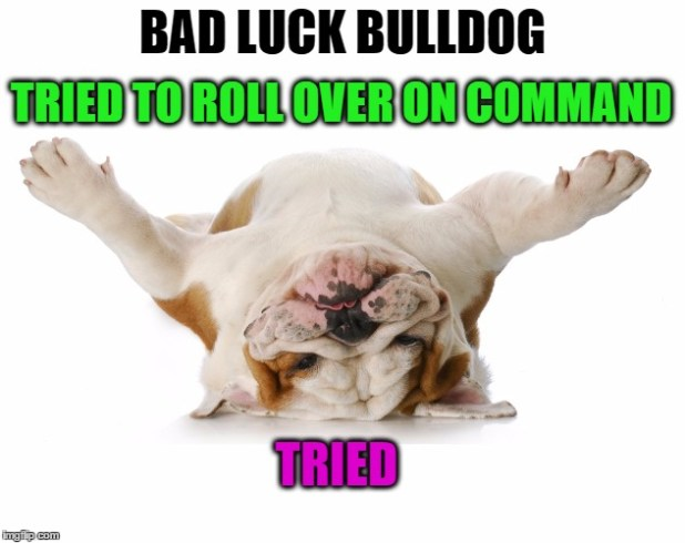 Bad Luck Bulldog.  Short and wide with a low center of gravity