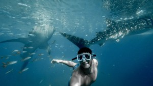 Watching The Whale Sharks Of Oslob In The Philippines