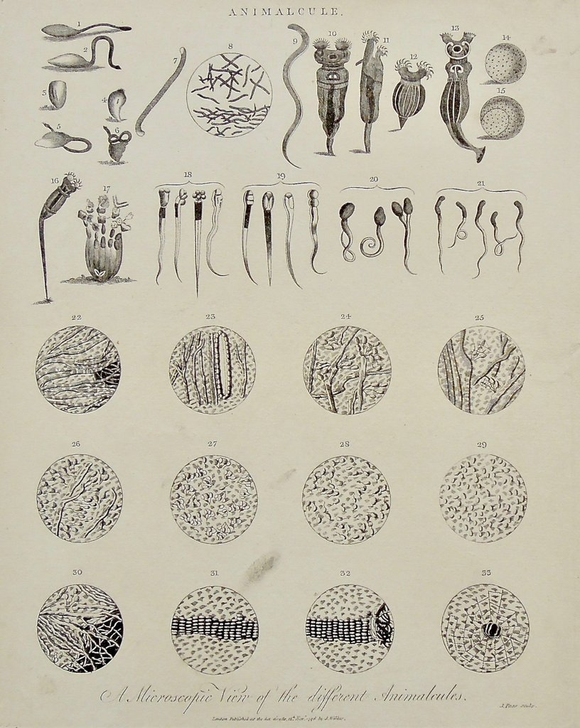 Animalcule.  A Microscopic View of the different Animalcules. - Lower Center: London, Published as the Act directs, 12th Novr. 1796, by J. Wilkes.  Lower Right: J. Pass sculp. -  - J. Pass -  - John Wilkes - Encyclopaedia Londinensis; or, Universal Dictionary of Arts, Sciences, and Literature, Comprehending, Under One General Alphabetical Arrangement, all the Words and Substance of Every Kind of Dictionary Extant in the English Language. In which the Improved Departments of the Mechanical Arts, the Liberal Sciences, the Higher Mathematics, and the Several Branches of Polite Literature, are Selected from the Acts, Memoirs, and Transactions, of the Most Eminent Literary Societies, in Europe, Asia, and America - J. Adlard - London - November 12th, 1796 - B1-93 (cropped)