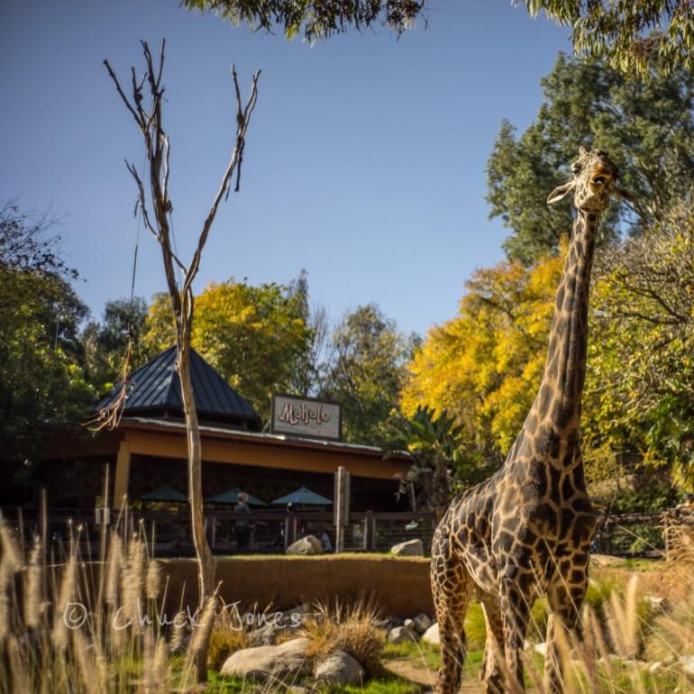 """""""Giraffe"""" - At The Zoo Series - A7R, Leica 35mm Summicron."""
