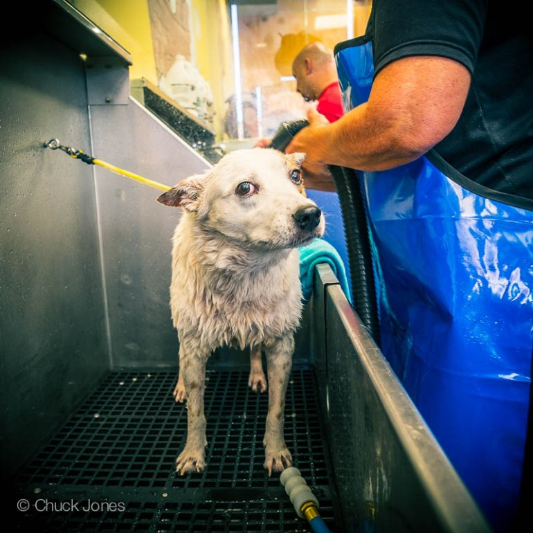 Pearl never cared much for the Doggie Wash either.