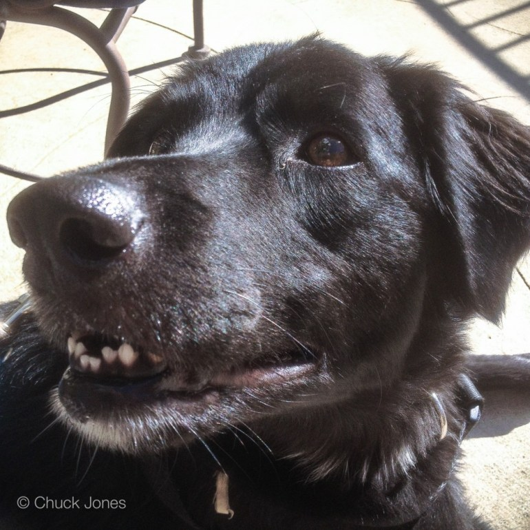 Big Lucky Dog - Remarkable Companion to Mr. Danny Kaufman