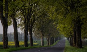 France is full of tree-lined country roads like this.