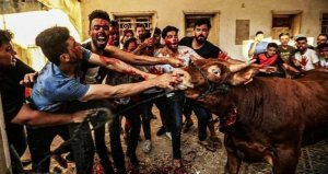 Muslims celebrate the festival of animal sacrifice with cruel, abhorrent bloodshed
