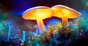 Motion to prevent sale of magic mushrooms defeated by Vancouver council