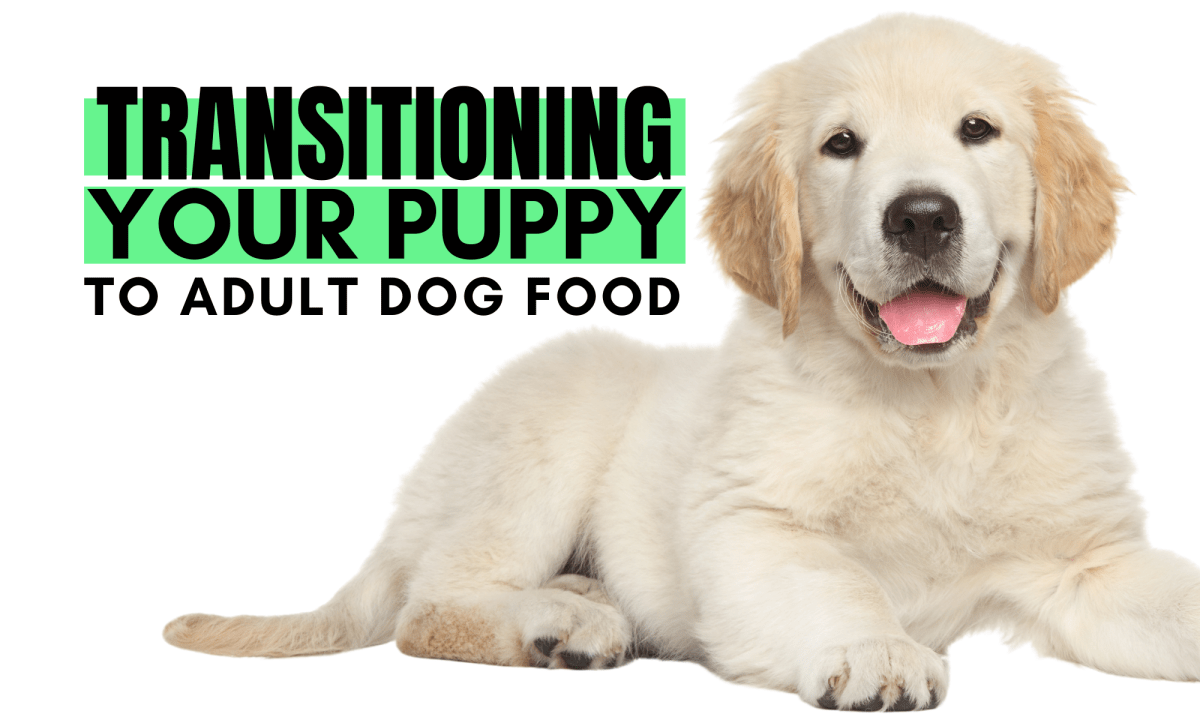 Transitioning to Adult Dog Food