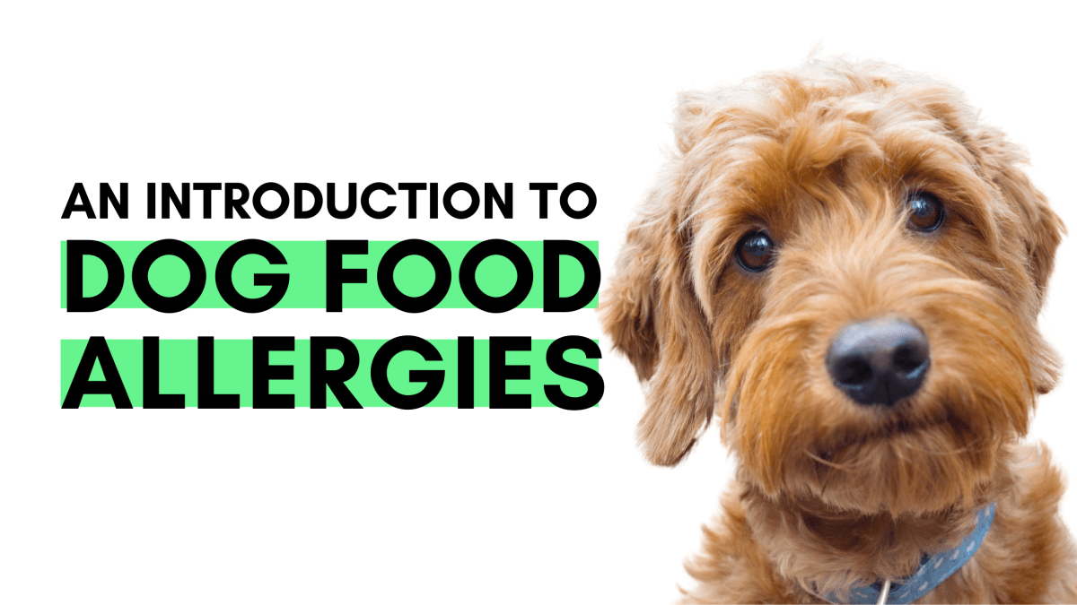 An Introduction to Dog Food Allergies