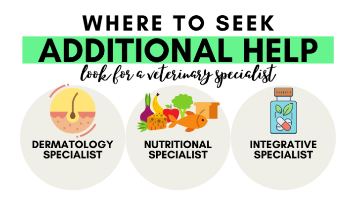 Where to seek help if you are still struggling with symptoms - Veterinary Dermatology Specialist, Veterinary Nutritional Specialist, or Integrative Veterinary Specialist.