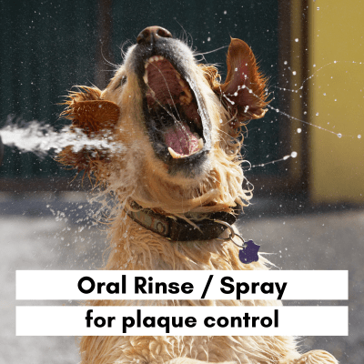 Oral Rinse for dogs for plaque control