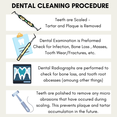 Brief description of teeth cleaning procedure in dogs.