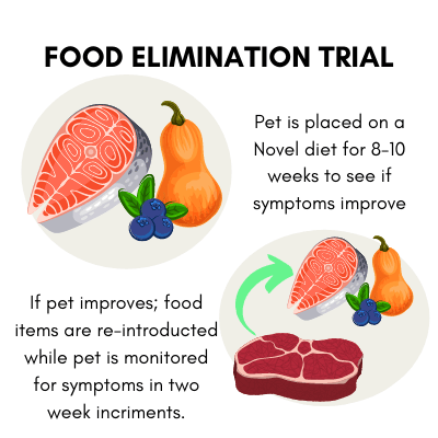 After the 8-10 week dog food elimination trial - if the dog improves then foods are reintroduced.