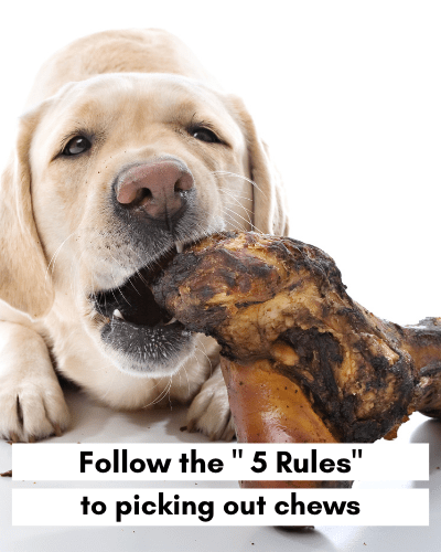 Follow these 5 rules to picking out chews - Labrador chewing on bone