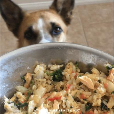 Dog staring at homemade fish dog food recipe