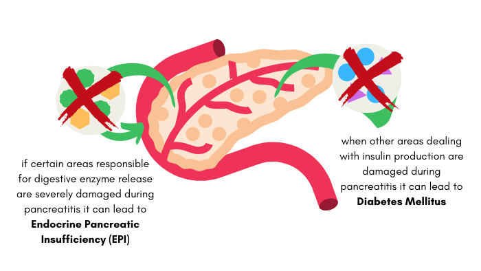 Visual of how two diseases can occur after dogs have pancreatitis