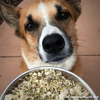 Dog looking at Homemade Dog Food for Food Trial