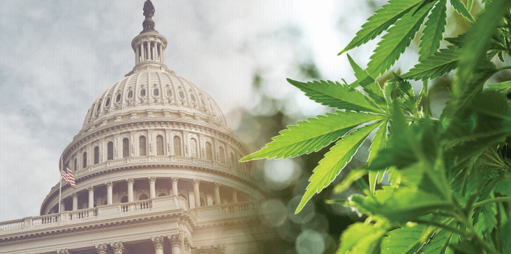 How Will The Federal Government Regulate Cannabis? We Have a Plan.
