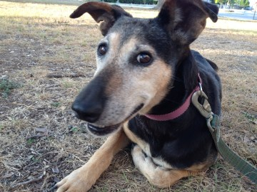 This sweet senior girl was living under a temporary classroom at Brackenridge High School for months.