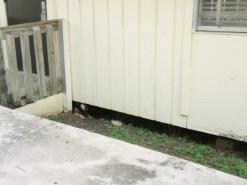 dog in its living space under a temporary classroom building