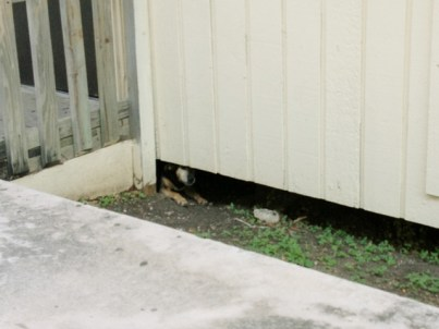 A stray dog finds shelter under a temporary classroom at Brackenridge High School in King William.