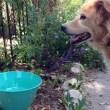 Cannoli's Canteen Program Provides Pet Water Bowls