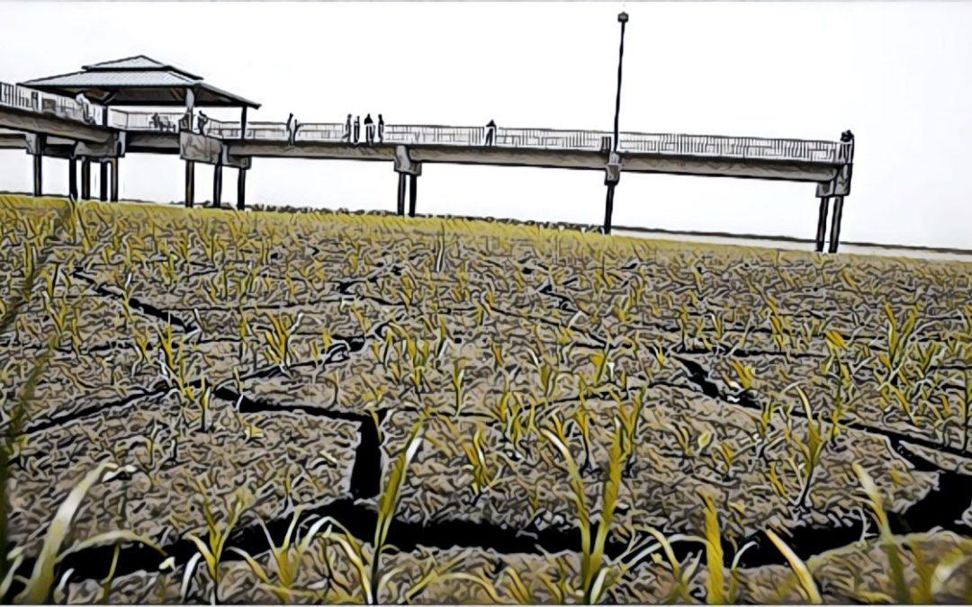 Brian Mast's threat to Florida's farmers also threatens President Trump