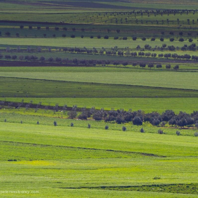 Fields, Morocco
