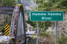 Hamma Hamma River, Washington, USA