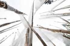 Looking Up Through Prayer Flag Poles, Bhutan