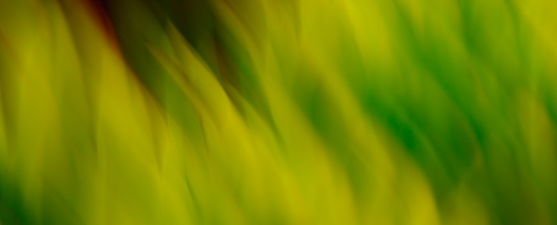 Photo Of The Day - Green Fire