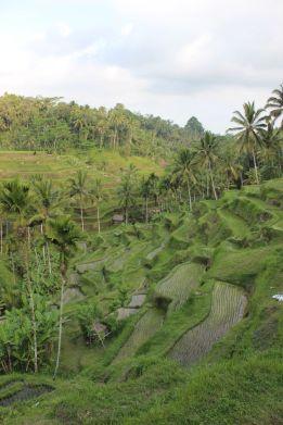 Bali_verkleinert3201