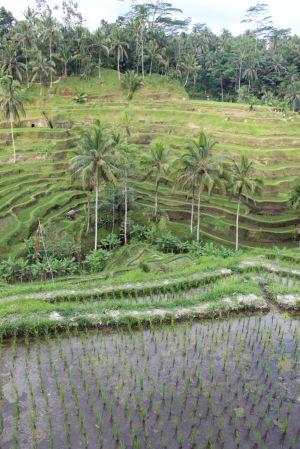 Bali_verkleinert3301