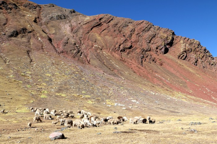 Rainbow Mountain, Peru 19
