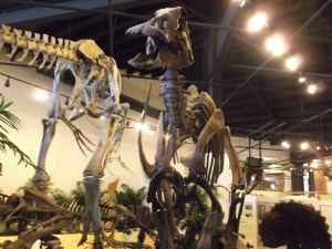 A skeleton at the Dinosaur Museum. Photo courtesy of Ming Lee Newcomb