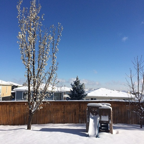 Denver Spring - Snow