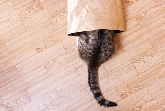Cat crawling into a bag