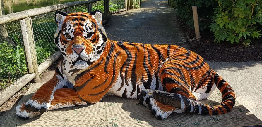 Chester Zoo Gives Big Cats The LEGO Treatment – Journalism