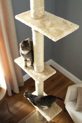 Tall Amp Narrow Cat Trees Thecatsite