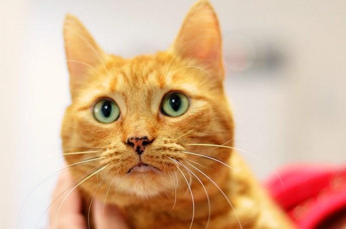 The Cat's Meow NW - Premier Cat Boarding Western Washington