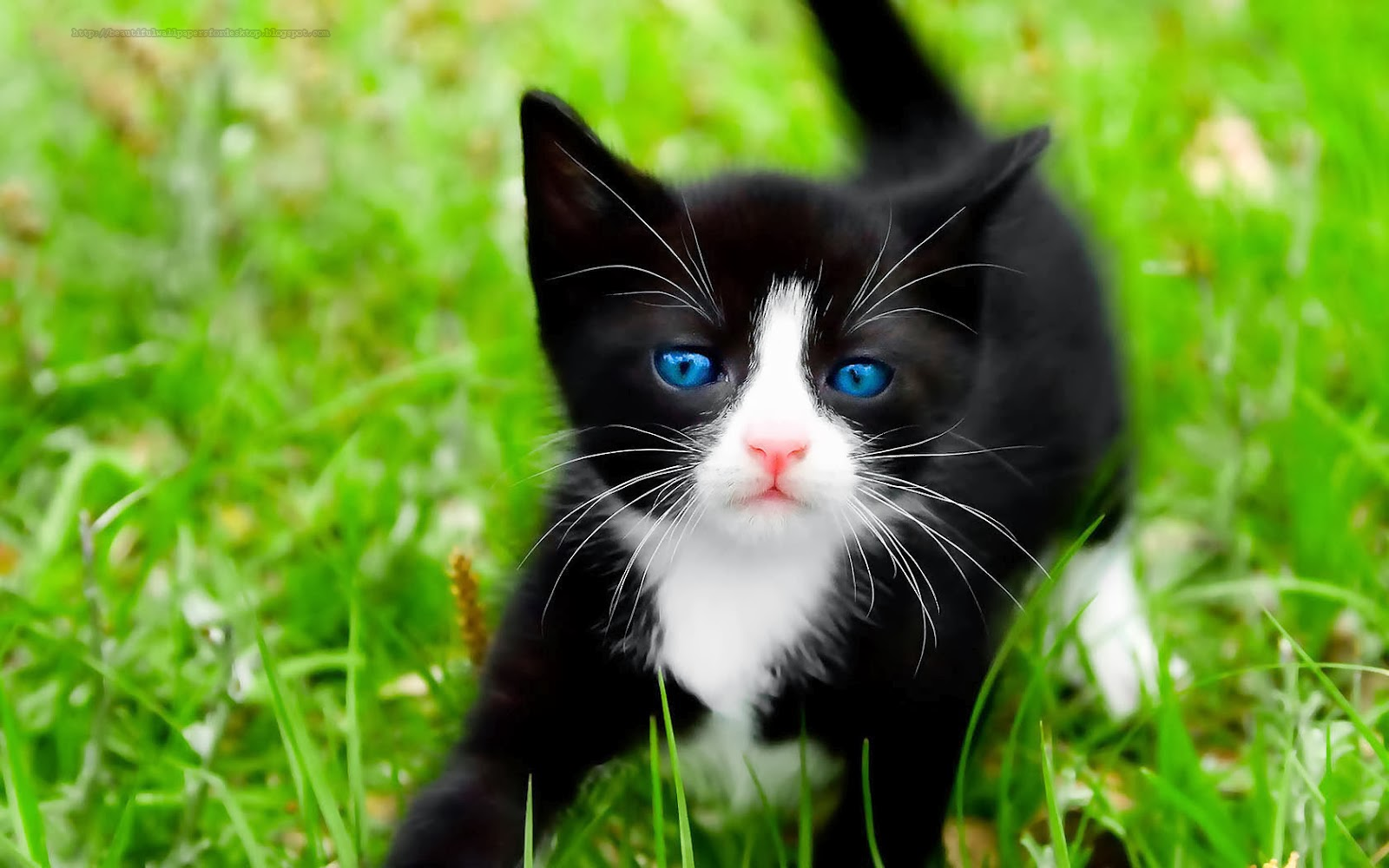Cute Cat Wallpapers Hd 1 The Cats Meow