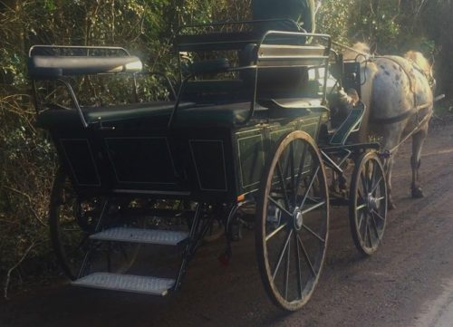 The Cavalry of Heroes - Wedding and Event Wagonette, drive horse and carriage hire, pair, Herefordshire and Wales