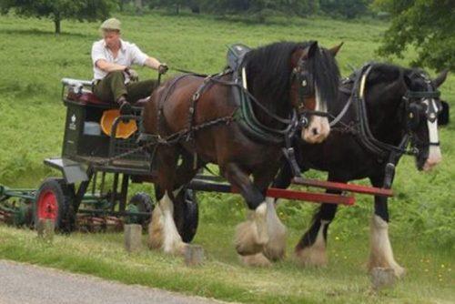 Marc Lovatt Roman Riding Pair of Horses, trick riding, stunt riding, Cavalry of Heroes, Appaloosa horses
