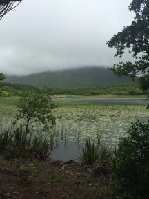 Bog in front of Kylemore Abbey