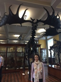 An Irish elk at the archaeology museum!