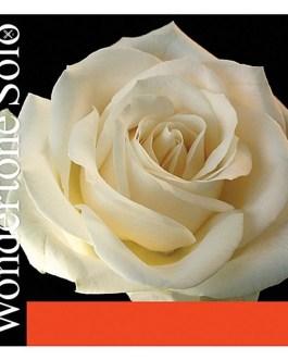 Комплект струн Pirastro 410521 Wondertone Solo для скрипки описание и цены