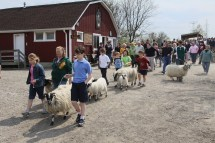 Sheep to Shawl The Center 2017 3
