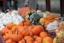pumpkin arty-filtered