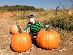 pumpkin burglar 2591